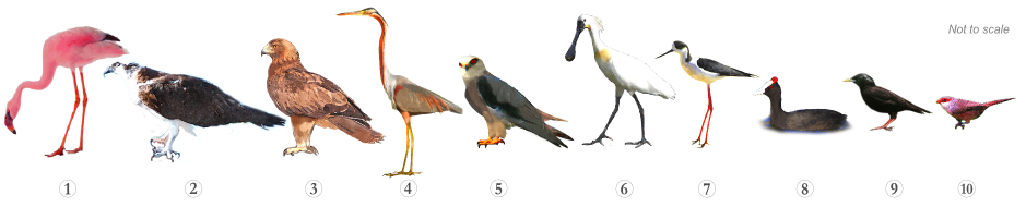 Bird Species - Specialities Quinta Ludo Trail Algarve