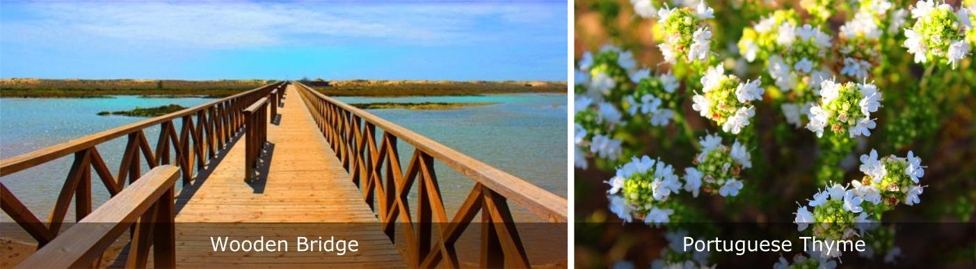 Quinta-do-Lago-Wooden-Bridge