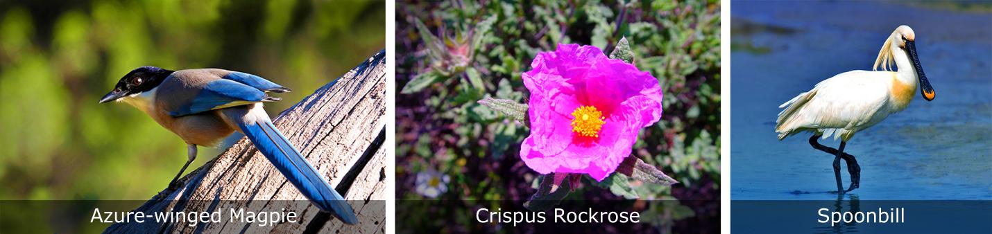 Ria-Formosa-Birds