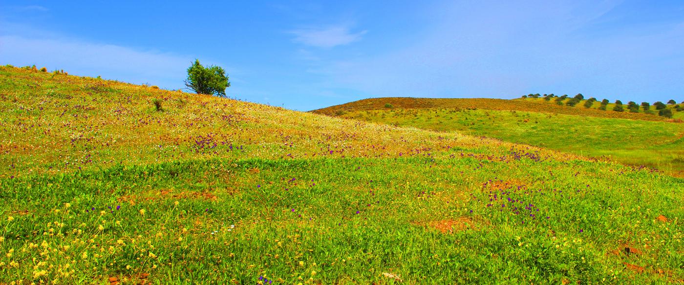 castro-marim-grassland
