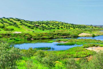 castro-marim-nature-reserve-algarve