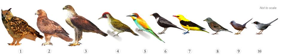 Bird Species - Specialities Serra do Caldeirão