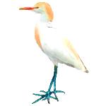 Bubulcus ibis Cattle Egret Algarve