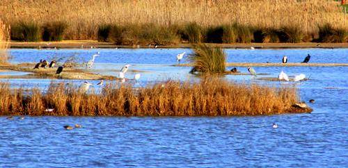 Salgados-Lagoon-Pera-Marsh-Algarve-Portugal-by-Muffinn
