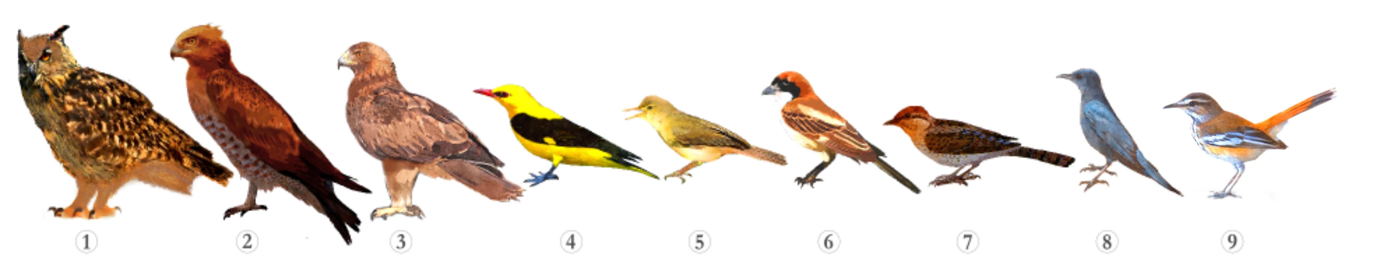 birds-of-the-algarve-barrocal-paderne