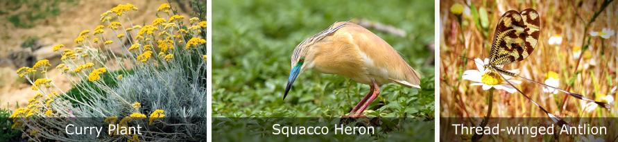Birds-Fauna-and-Flora-Pera-Marsh