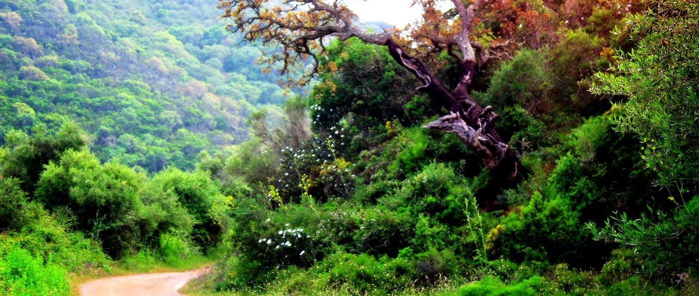 Bordeira-Walking-Trail-Vicentine-Coast-Natural-Park