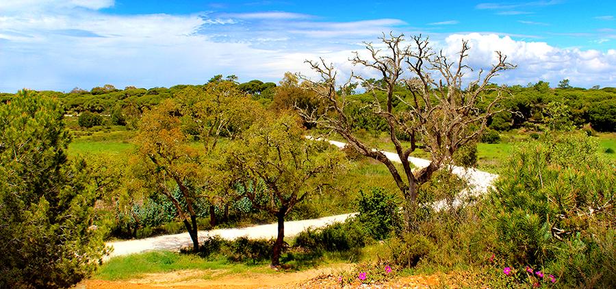 Pontal Forest Trail - Ria Formosa